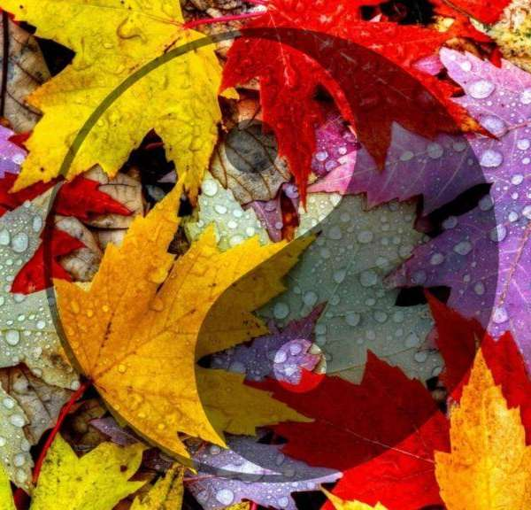 Chinese Medicine Tips for a Healthy Autumn